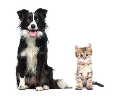 Coquitlam kennels dog and cat boarding